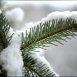 Schnee auf einem Zweig